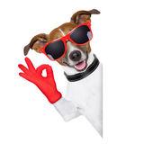 Ok fingers dog — Stock Photo