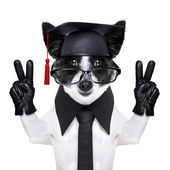 Absolvent pes — Stock fotografie