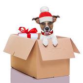 Winter christmas dog — Stock Photo