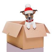 Moving box winter dog — Stock Photo