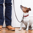 Dog and owner — Stock Photo #36253043