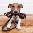 Dog leather leash — Stock Photo #36253279