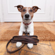 Dog leather leash — Photo