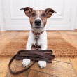 Dog leather leash — Stockfoto