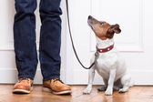 Dog and owner — Stockfoto