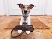 Dog leather leash — Stock Photo