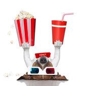 Movie cinema dog — Stock Photo