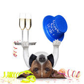 New years eve dog — Stock Photo