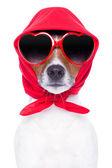 Diva dog — Zdjęcie stockowe