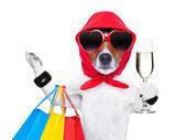 Pies diva zakupoholiczki — Zdjęcie stockowe