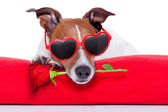 Valentines day dog — Foto Stock