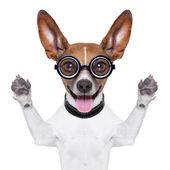 Stom gekke hond — Stockfoto