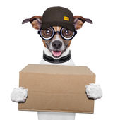 Dog delivery post — Stock Photo