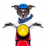 Motorbike dog — Stock Photo #39957541