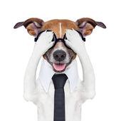 Hiding covering crazy dog — Stock Photo