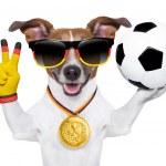 Brazil  fifa world cup  dog — Stock Photo #43068981