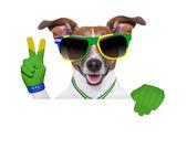 Brazil  fifa world cup  dog — Stock Photo