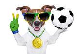 Brazilië fifa wereld kopje hond — Stockfoto