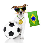 Dog as soccer with medal and  flag — Stock Photo