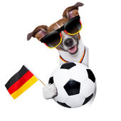 Brazil  fifa world cup  dog — Stock Photo