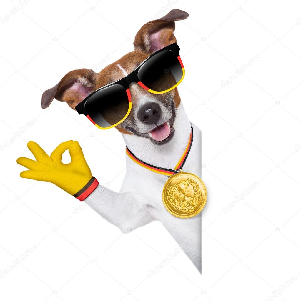 Brazil fifa world cup dog — Stock Photo © damedeeso #43069093