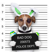 Easter mugshot dog — Stock Photo