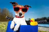 Summer dog on bike — Stock Photo