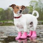 Dog in the rain — Stock Photo #44087669