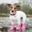 Dog in the rain — Stock Photo