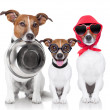 Happy family of dogs — Stock Photo