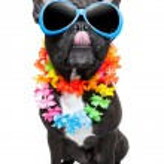 Holiday summer dog — Stock Photo