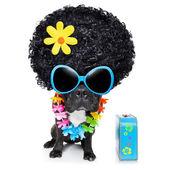 Hippie dog — Stock Photo