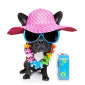 Vakantie zomer hond — Stockfoto