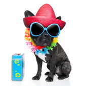 Holiday summer dog — Stock Photo