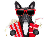 Dog to the movies — Stock Photo
