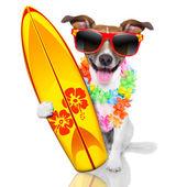 Surfer dog  — Stock Photo