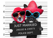Just married mugshot — Stock Photo