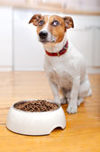Hungry dog  — Stockfoto