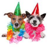 BIRTHDAY DOGS — Stock Photo