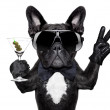 Peace cocktail dog — Stock Photo #45550303