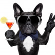 Cocktail dog  — Stock Photo #45550365
