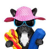 Französische Bulldogge im Urlaub — Stockfoto
