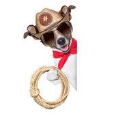Cowboy dog — Stock Photo