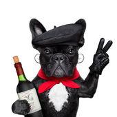 French dog — Stock Photo