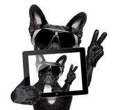 Собака селфи — Стоковое фото