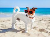Dog at beach — Stock Photo