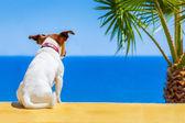 Dog watching — Stock Photo