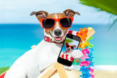 Summer selfie dog  — Stock Photo