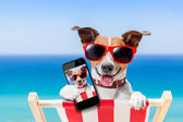 Summer selfie dog  — Stock Photo