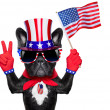 American dog — Stock Photo #47466995